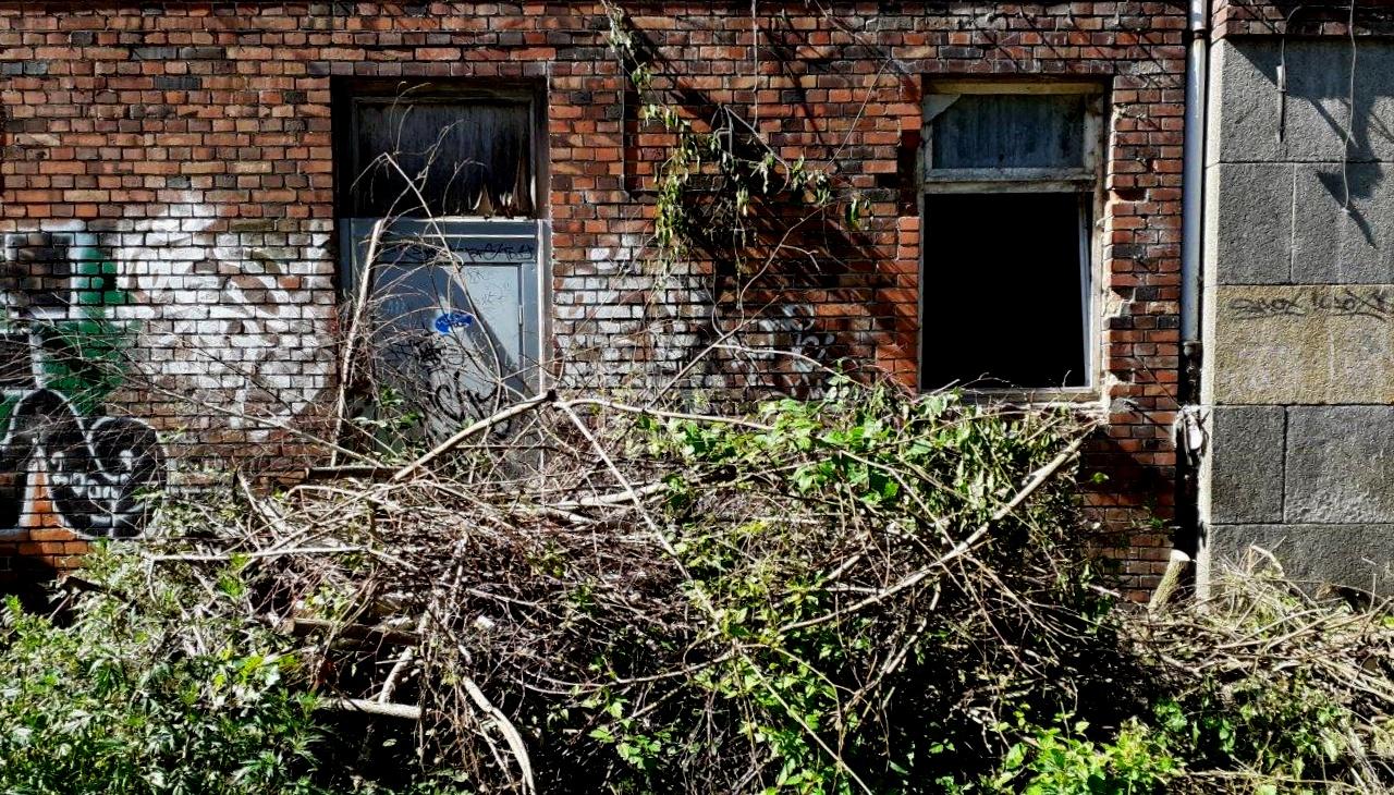 Ehemaliges Postfuhramt - Nach der Abholzaktion 6